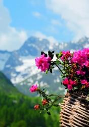 Alpenrosen...