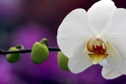 Südtirol Orchideen...